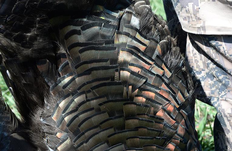 World Turkey Hunt Traeger Feathers Decoy
